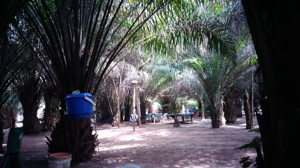 Lovely place to enjoy a beer with palm trees providing shade from the sun with @chloe_kira.creer. Abengourou, Cote d'Ivoire.